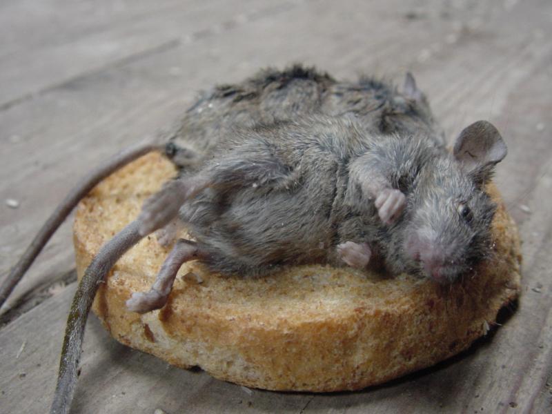 muizen | steenuilopwinterswijk.nl, Gartenarbeit ideen